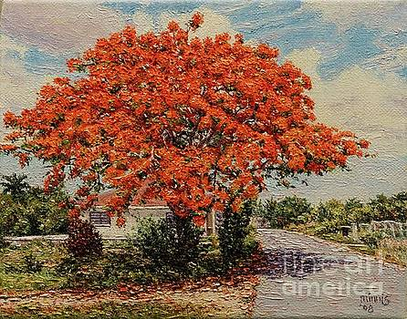 Bluff Poinciana by Eddie Minnis