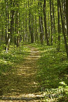 Elaine Mikkelstrup - Bluff Trail Awenda Provincial Park