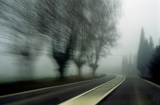 Sami Sarkis - Blurry bare trees visible through the fog