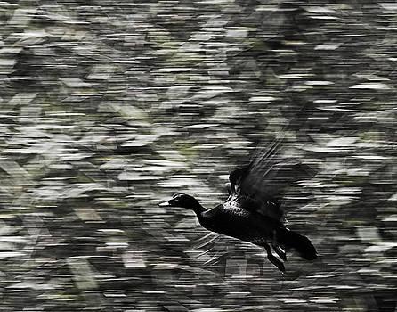 Blurry Bird by Ron Dubin