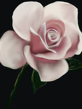 Blush Beauty Rose by Michele Koutris