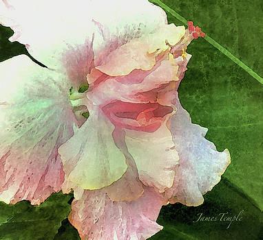 James Temple - Blush Digital Watercolor