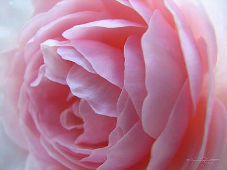 Blush by Karen Casey-Smith