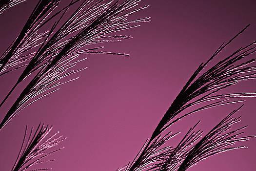 Blush by Kristen Vota