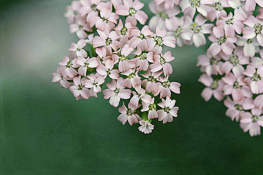 Blush Pink Flowers on Emerald Green by Brooke T Ryan