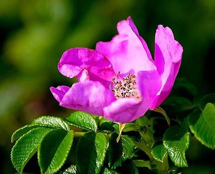 Blushing Wild Flower by Suzanne McDonald