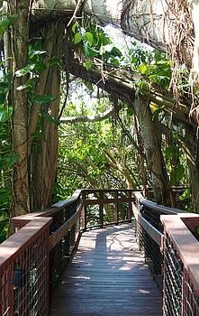 Boardwalk at Selby Gardens Sarasota Florida by Sheryl Unwin