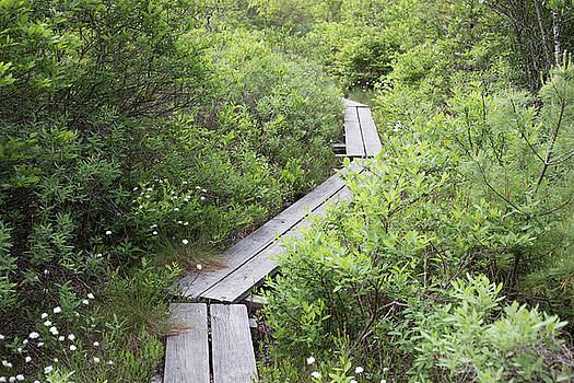Boardwalk, Ponemah Bog by New England Photographic