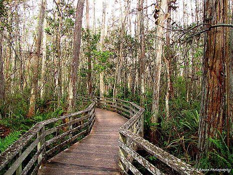 Barbara Bowen - Boardwalk through Corkscrew Swamp