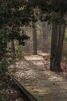 Boardwalk Through the Woods by Liza Eckardt