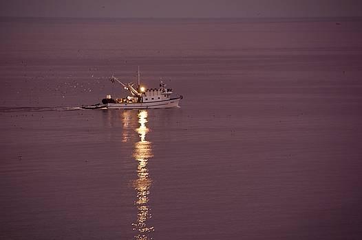 Boat In Rovinj Croatia by Phil Child