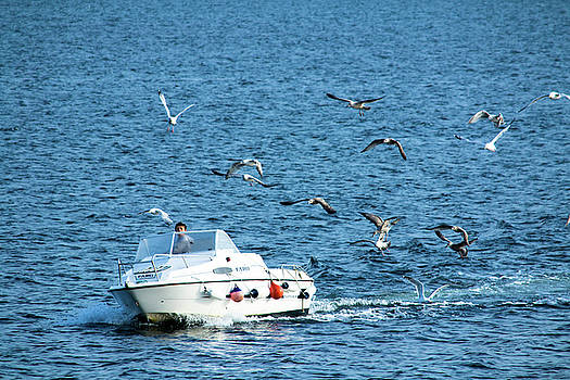 Mike Shaw - Boat with Gulls