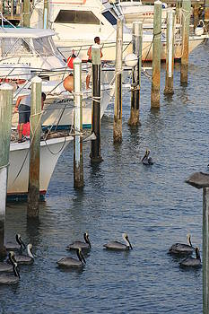 Boats...Birds...and Posts by Maria Young