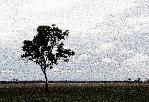 Bobbiwaa tree by Elizabeth McPhee