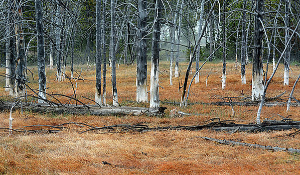 Bobby Sock Trees and Red Grasses by Bruce Gourley