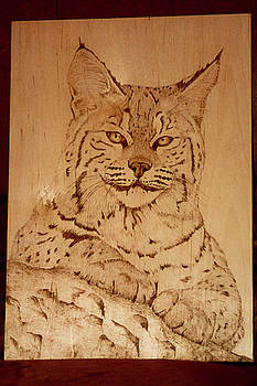 Bobcat by Angel Abbs-Portice