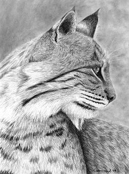 Heather Ward - Bobcat