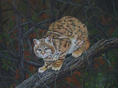 Bobcat by Joan Barnard