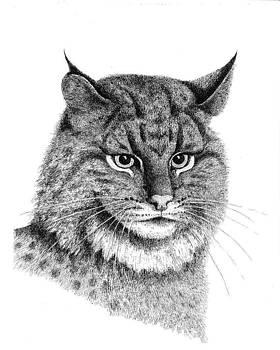Lee Pantas - Bobcat