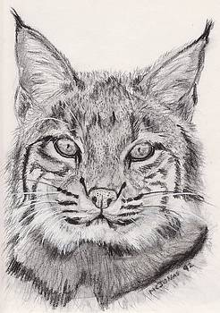 Bobcat by Marqueta Graham