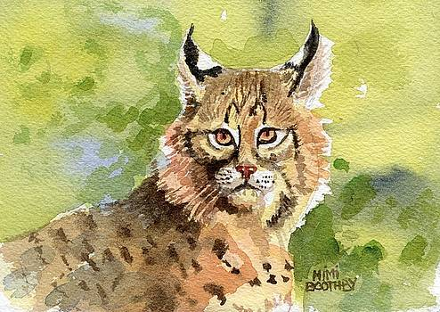 Bobcat by Mimi Boothby