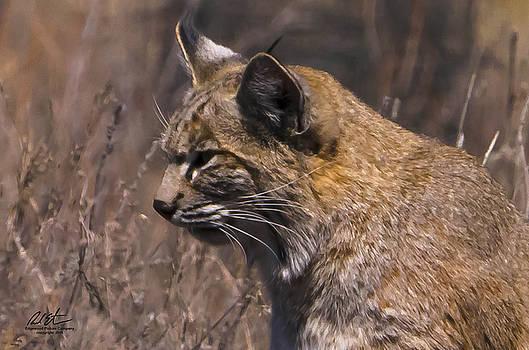 Bobcat by Richard Estrada