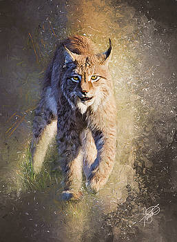Bobcat by Tom Schmidt