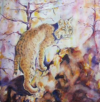 Bobcat by Joel Sundquist