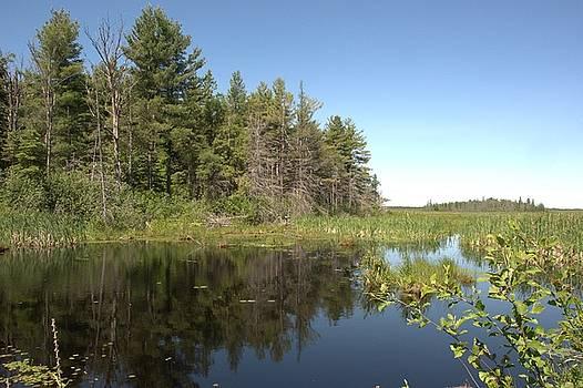 Valerie Kirkwood - Bog Reflections
