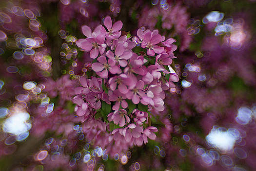 Bokeh Pink with a bit of sky by Sharon Wilkinson