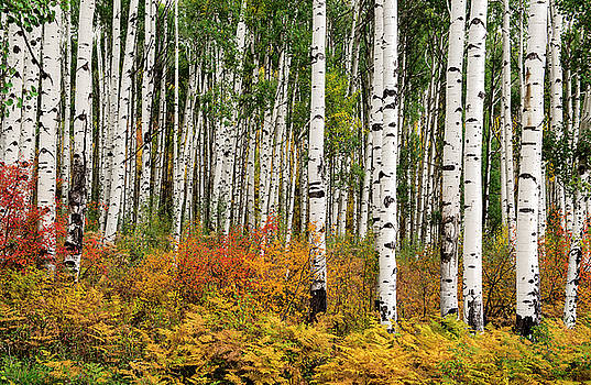 Bold and Magnificent Autumn by Tim Reaves