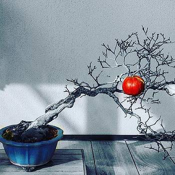 #bomsaitree #bonsai #bonsaiphotographer by Sharon Halteman
