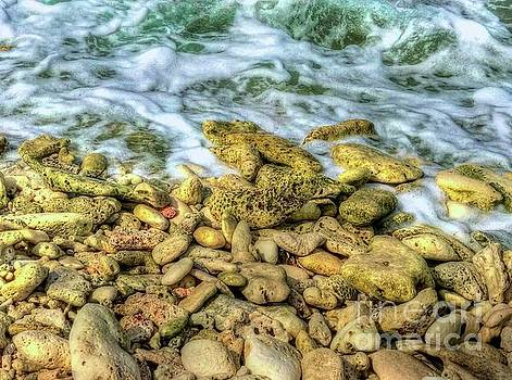 Bonaire Shoreline by Debbi Granruth