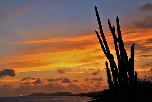 Bonairian Sunset by Jennifer Ansier