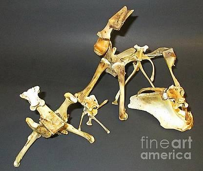 John Malone - Bone Creatures Two