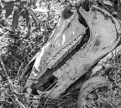 Bones of the Southwest by Julie Basile