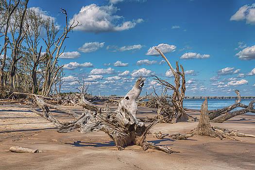 John M Bailey - Boneyard Beach