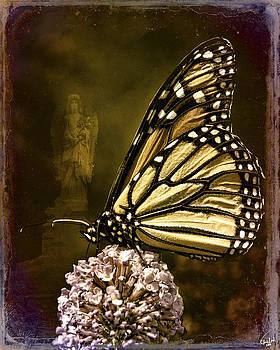 Chris Lord - Boneyard Butterfly