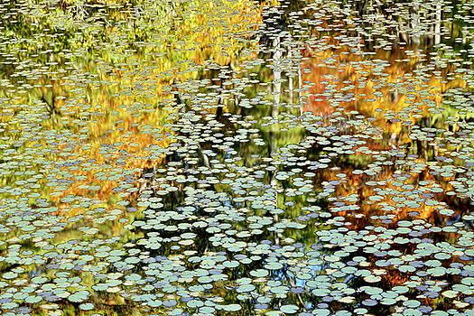 Bonjour Monsieur Monet by Miroslav Vrzala
