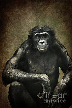 Bonobo by Angela Doelling AD DESIGN Photo and PhotoArt