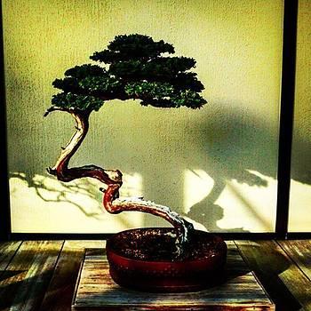 #bonsai #bonsaitree #japan #japanese by Sharon Halteman