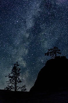 Ralph Nordstrom - Bonsai Milky Way 2014