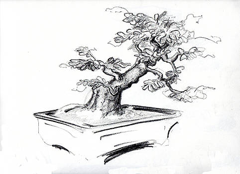 Thomas Lupari - Bonsai