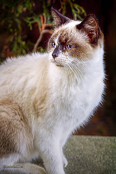 LeeAnn McLaneGoetz McLaneGoetzStudioLLCcom - Bookend Kitty II