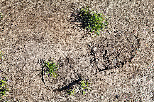 Boot Print in the Desert by Sharon Foelz