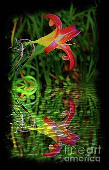 Boquete Lily Reflection by Al Bourassa