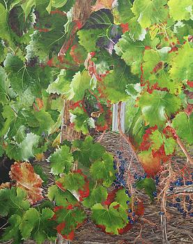 Bordeaux Vineyard 1 by Steven Fleit
