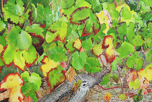 Bordeaux Vineyard 2 by Steven Fleit