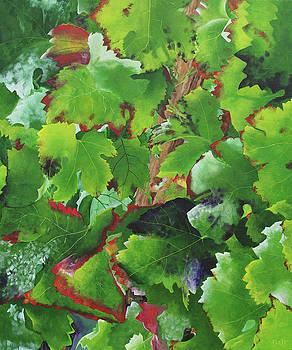 Bordeaux Vineyard 3 by Steven Fleit