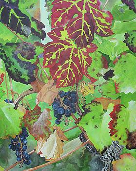 Bordeaux Vineyard 4 by Steven Fleit